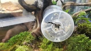 best ant videos