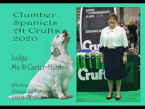 Clumbers At Crufts 2020