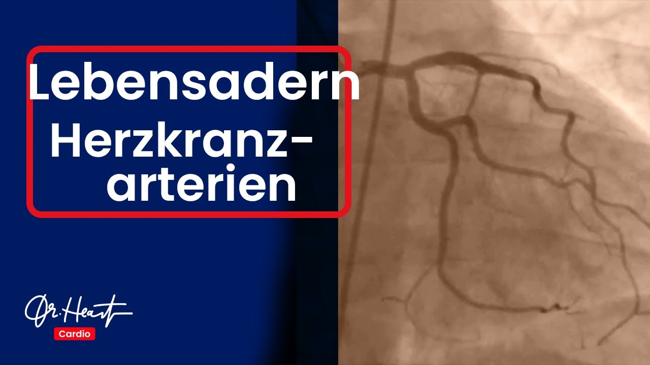 Koronararterien | Dr. Heart - YouTube