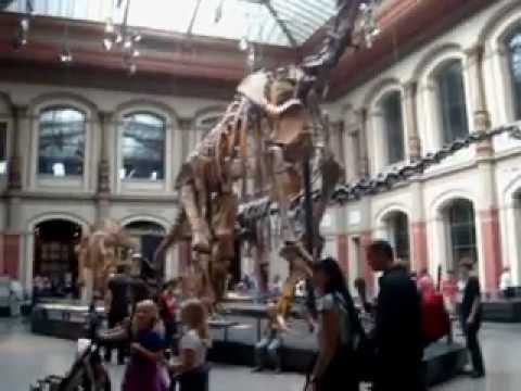 Museo Historia Natural. Berlin. Alemania Videos De Viajes