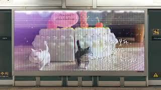 고양이 생일파티(지하철)