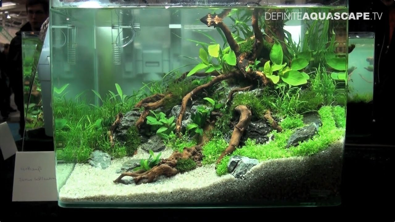 Qualifyings For The Art Of The Planted Aquarium 2015 Nano Category Compilation Youtube