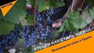 Ртвели как стиль жизни: виноградная осень в Грузии
