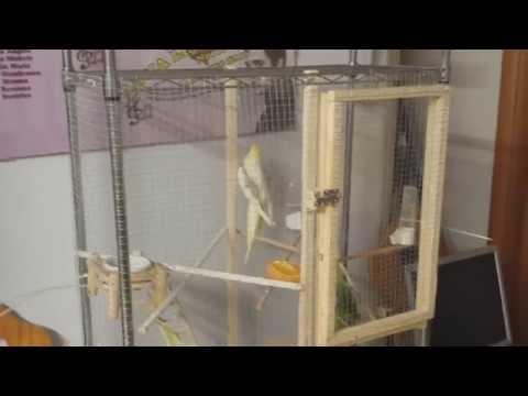 Costruzione gabbia uccelli in legno doovi for Voliera fai da te