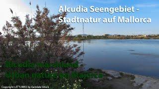 Mallorca: Alcudia Seengebiet / Majorca: Alcudia Marshland