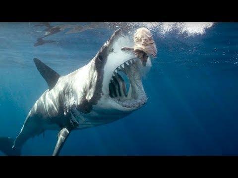 Okyanusların En Büyüğü MEGALODON Köpek Balığı