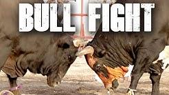Traditional Bull Fighting in Fujairah