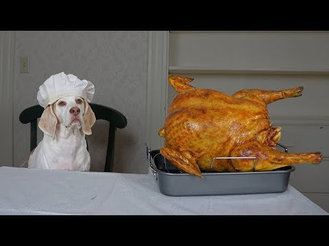 Dog Cooks Thanksgiving Dinner: Funny Dog Maymo Makes Turkey Recipe