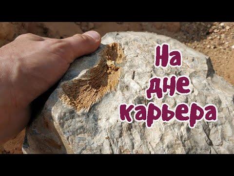 Как я стал палеонтологом и что можно найти на дне карьера с металлоискателем.