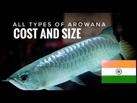 All Types Of Arowana Available In India | Ranked According To Their Cost