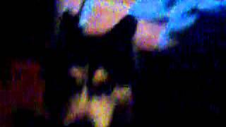 Песни моей собаки
