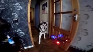 Собака и квадрокоптер