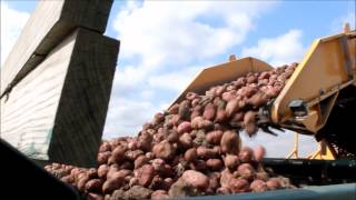 DeGroot's Vegetable Farm Potato Process