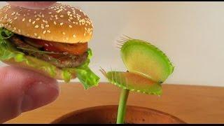 Charlie eating a MINI HAMBURGER! thumbnail
