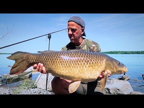 CANADA | CARP FISHING ONTARIO | FISHING THE ST LAWRENCE RIVER