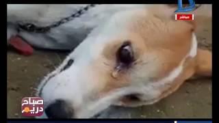 صباح دريم|صور موجعة لأصحاب لقلوب الرحيمة.. حملات الطب البطري لتسمم الكلاب وسط دموع الحيوانات