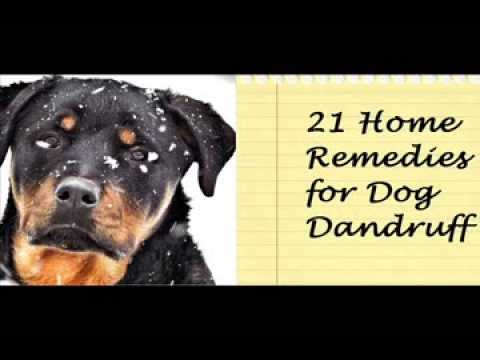 Home Remedies For No Dandruff