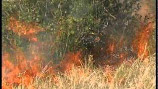 Bush Fire - South Africa Travel Channel 24