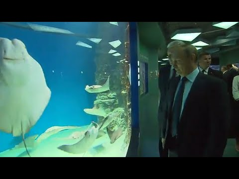 Russia: Putin enjoys killer whale show at Moscow