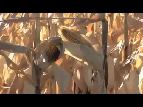 Documentary 2013 Genetically Modified Foods