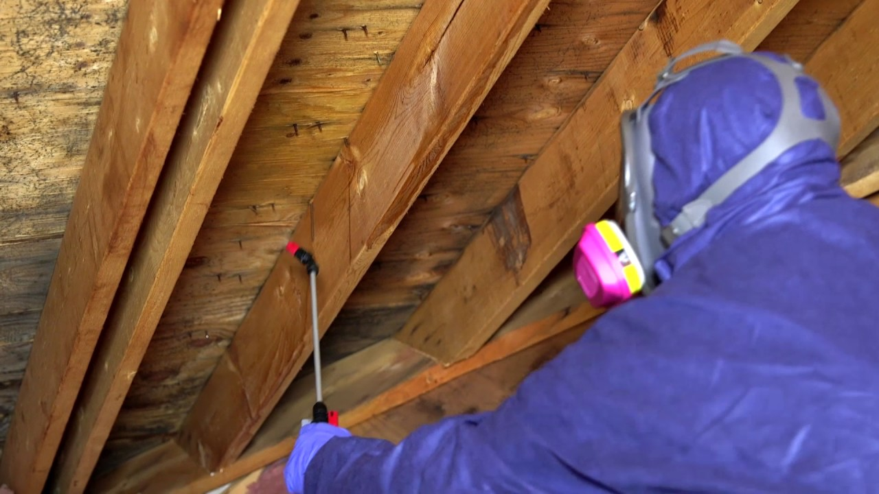 Mold X2 Kills Mold In Crawl Spaces And Attics Amp Helps