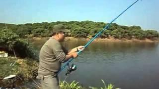 Video   Fishing viet nam Câu LB câu cá phao màu hồng   Fishing viet nam Cau LB cau ca phao mau hong