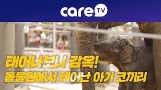 [케어TV]태어나보니 감옥, 동물원에서 태어난 아기 코끼리