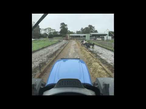 life on a Dairy farm in australia 2017