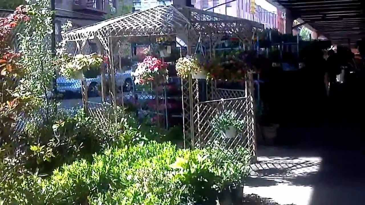 Welcome To Urban Garden Center   East Harlem   NYC