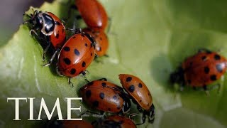A Ladybug Swarm In California Was Big Enough To Show Up On Weather Radar | TIME