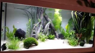 100l Mangroven Aquarium Rotkopfsalmler, Panzerwelse