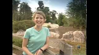 Great Hotels – Disney's Wilderness Lodge