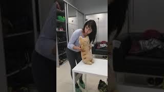 Как сделать массаж коту