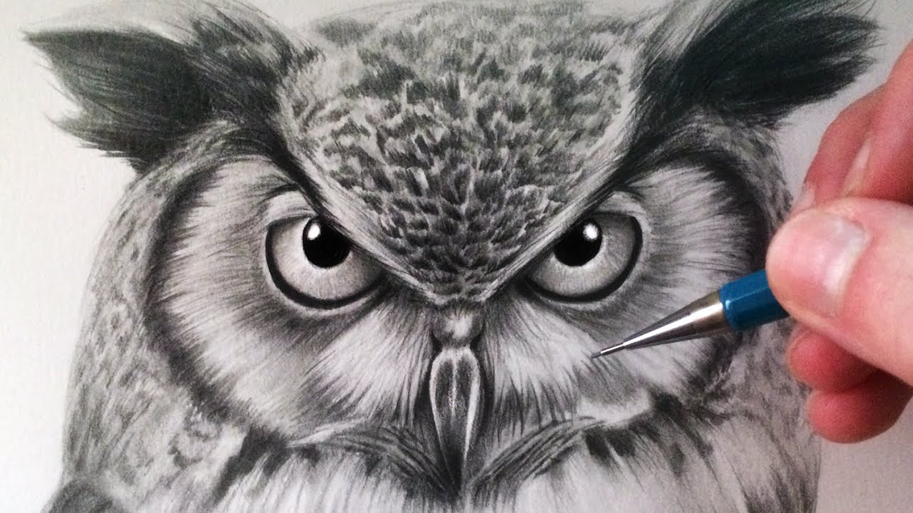 - How To Draw An Owl - YouTube