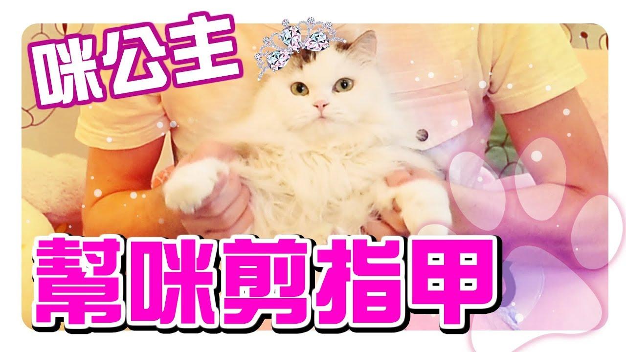 幫貓咪剪指甲都很可怕?!乖乖躺著給你剪的貓太可愛了!【赤井】 - YouTube