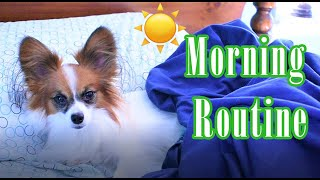My Morning Routine // Percy the Papillon Dog Vlog