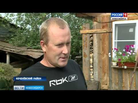 Новосибирские ветеринары устроили тотальную инспекцию из-за вспышки африканской чумы свиней в Омске
