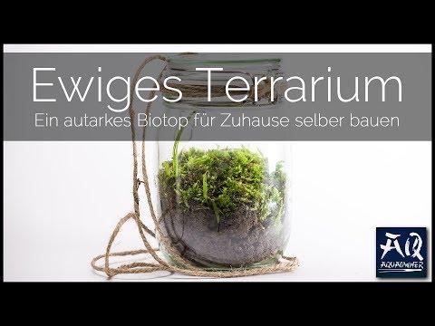 EWIGES TERRARIUM SELBER BAUEN | so erschaffst du ein autarkes Biotop für Zuhause | AquaOwner