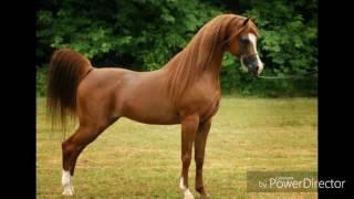Кто ты по знаку зодиака из лошадей!?🐴🐎🦄🏇