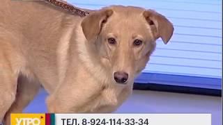 Поиск пропавших животных. Утро с Губернией. 16/01/2017. GuberniaTV