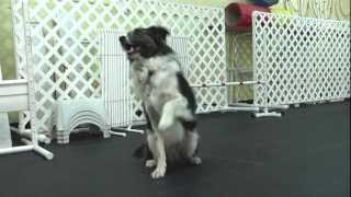 Take Paws: Agility Traİning with Holly Blakney, CPDT-KA