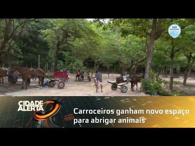 Carroceiros ganham novo espaço para abrigar animais no Reginaldo, em Maceió