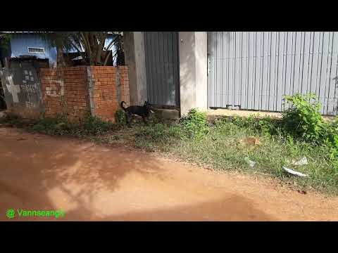 Incredible  Dog , How To See Dog Stuck in  Entrance   Gate way House