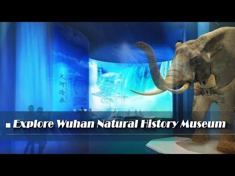 Live: Explore Wuhan Natural History Museum探秘国内首个大河生命自然博物馆