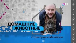"""Павел Ижболдин в передаче """"Домашние животные с Григорием Маневым"""""""