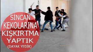 SİNCAN KEKOLARINA KIŞKIRTMA YAPTIK DAYAK YEDİK!!!