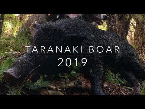 Taranaki NZ Pig Hunt 2019