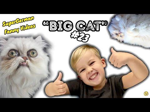 СМЕШНЫЕ КОШКИ 2020 КОТЫ Приколы С Котами и Кошками Funny Cats   Три Кота   Лучшие приколы в 4K #23