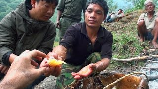 Hallucinogen Honey Hunters - Hunting mad honey - documentary thumbnail