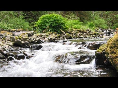Suara Air Untuk Terapi Burung Stress